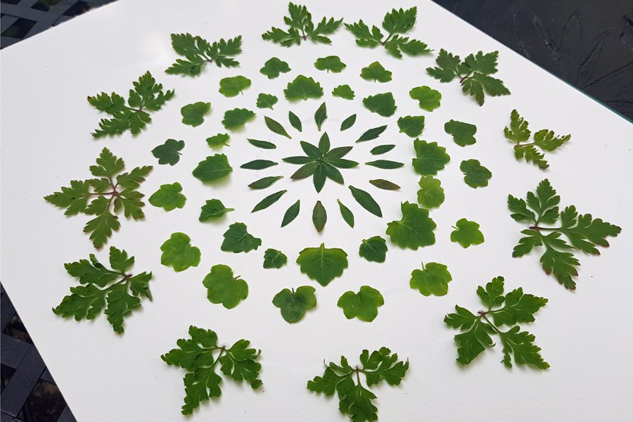 Natuure mandala made from circular, symmetircal patterns made with leaves